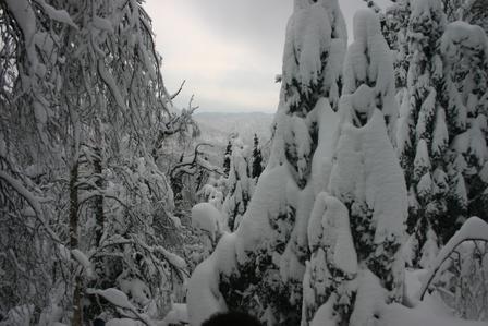 snowyg